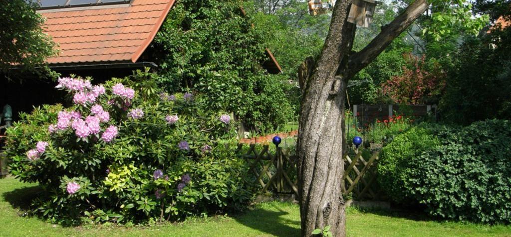 im romantischen Garten rund ums Haus - Ferienhaus Familie Penzinger Deutschlandsberg