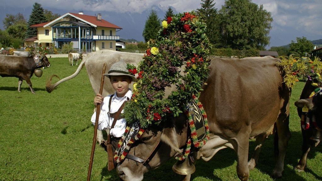Almabtrieb in Mutters - Foto: Innsbruck Tourismus