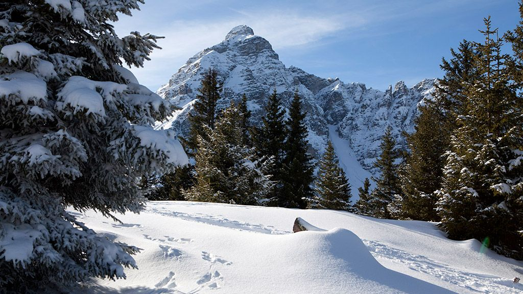 Winterwald - © Tirol Werbung/Markus Jenewein - Tirol