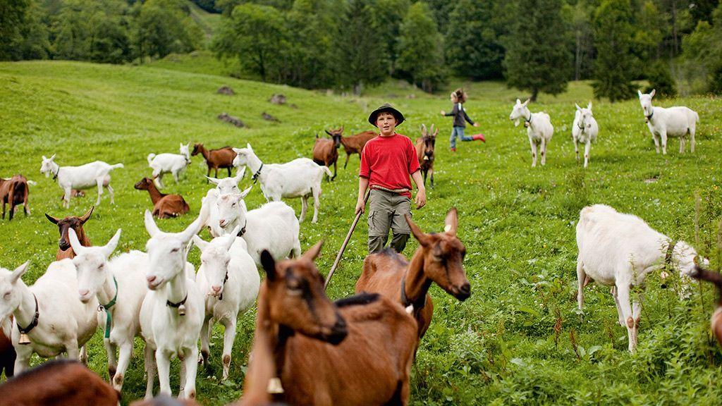 Kinder und Ziegen - Foto: Andreas Riedmiller/Bregenzerwald Tourismus