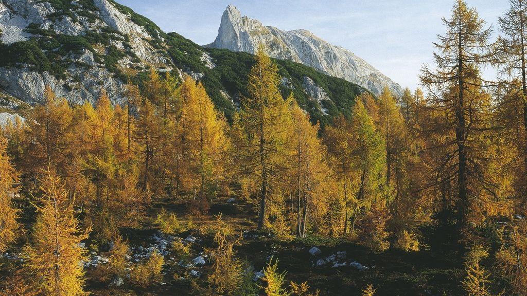 Herbst in der Steiermark - Foto: Österreich Werbung / Wiesenhofer