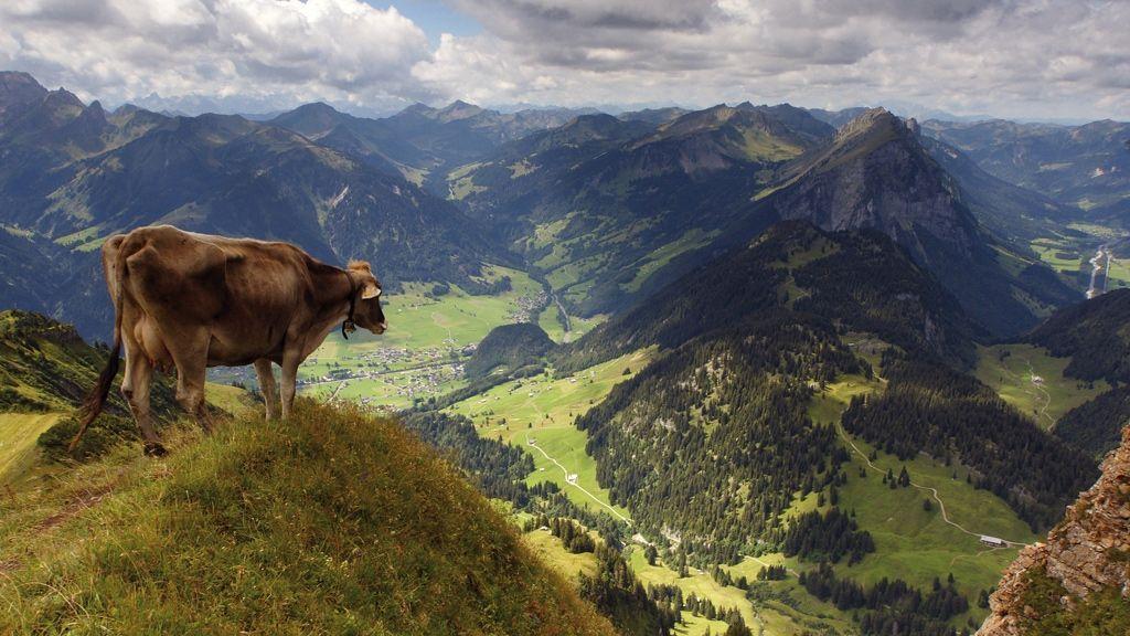 Blick auf Au und Kanisfluh - Foto: Ludwig Berchtold / Vorarlberg Tourismus
