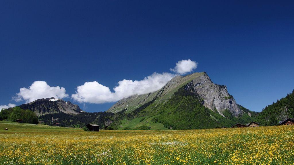Wiese in Au mit Kanisfluh - Foto: Ludwig Berchtold / Vorarlberg Tourismus