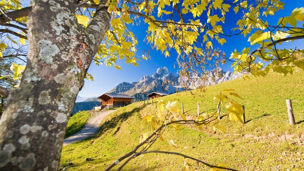 Almhütte auf der Sulzenalm vor der Bischofsmütze durch die Zweige eines Bergahorns gesehen, 2014 - © SalzburgerLand Tourismus / F. Pritz