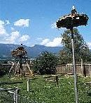 Storchensiedlung Altreu