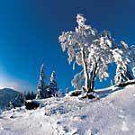 Winter - Bayerischer Wald Bayern