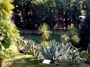 Erzherzoglicher Baumgarten