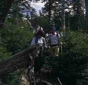 Wandern im Nationalpark - Weyer Upper Austria