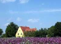 Altes Zollhaus - Altes Zollhaus Nikitsch