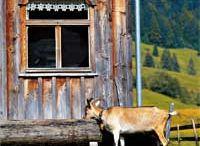 """Jausenstation """"Alpe Buchen"""""""