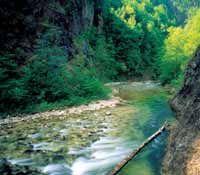 Wandern Österreich - klare Gebirgsbäche in unberührter Natur - Großraming Oberoesterreich