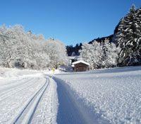 Tourismusverband Wipptal, Ortsstelle Trins Image - Trins Tirol