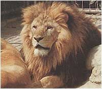 Tierpark Diana - Malta - Malta Kaernten