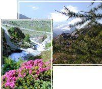 Parco Nazionale Stelvio - Santa Caterina Valfurva Lombardei