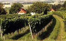 Nature Park in the Vineyards