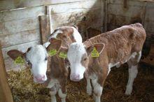 Pension Fürhapter Bio- Bauernhof