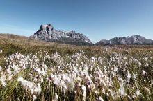 Geführte Bergtour - Widderstein