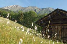 Naturwunder-Wanderung: Argenschlucht - Auer Ried