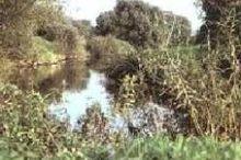 Naturpark Raab