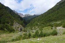 Spirkenwald am Fernpass