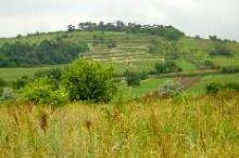 Weinbaugebiet Jois