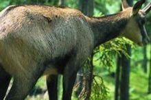 Wildlife Mountain Preserve