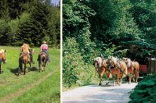Carriage Rides Into Hintergebirge Mountains