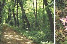 Naturlehrpfad zur Waldschule