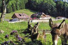 Almgasthof Hochsteinalm