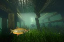 Exhibition: underwater empire