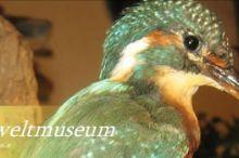 Salzkammergut - Fauna Museum
