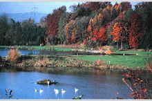 Weibern Swimming Pond