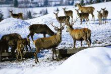 Wildbeobachtung mit passioniertem Jäger