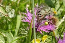 Schmetterlingslehrweg