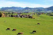 Schwarzenberger Braunvieh- und Ziegenausstellung