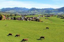 Schwarzenberger Braunviehausstellung und Ziegenausstellung