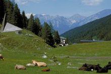 Alpiner Rundwanderweg Axamer Lizum