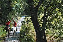 Reitstall Zauchtalerhof