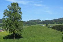 Celtic hill