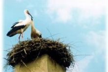 Styria's Most Northern Stork's Nest