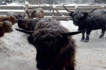 Winter-Erlebnisse -