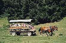 Ausflug mit Wagen und Pferd