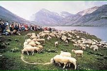 Shepherds' festival on the Gemmi