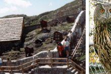 Murmeltier- Eulen- und Waschbärenpark