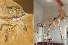 Jura Musuem und Museum für Ur- und Frühgeschichte