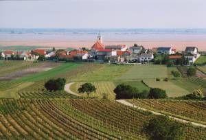 Blick auf Jois vom Kirschblütenradweg B 12 - Jois Burgenland