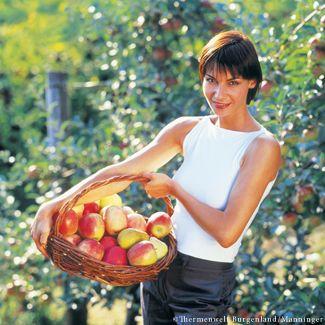 Genuss zu jeder Jahreszeit. Wellness und Gesundheit mit Kompetenz. - Thermenwelt Burgenland Burgenland