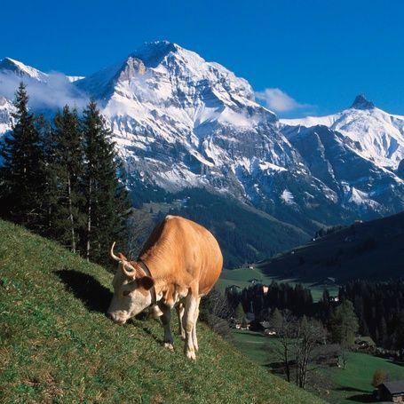 Adelboden-Frutigen Bernese Oberland