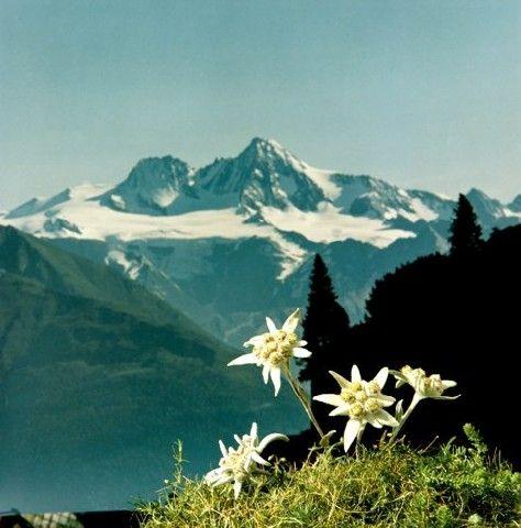 Großglockner - Kals a. G. - Hohe Tauern Osttirol Tirol