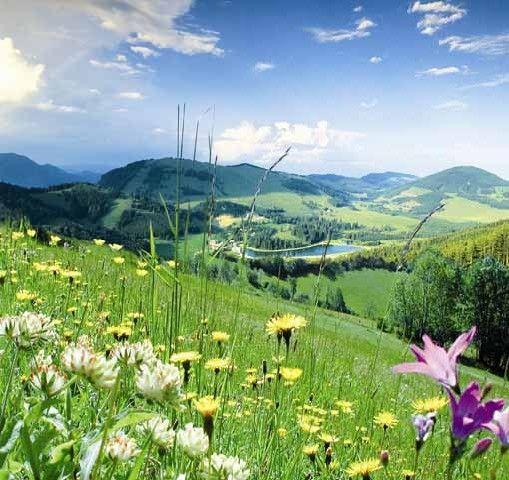 Naturpark Almenland, 40 km nördlich von Graz, Steiermark, Österreich - Almenland Styria